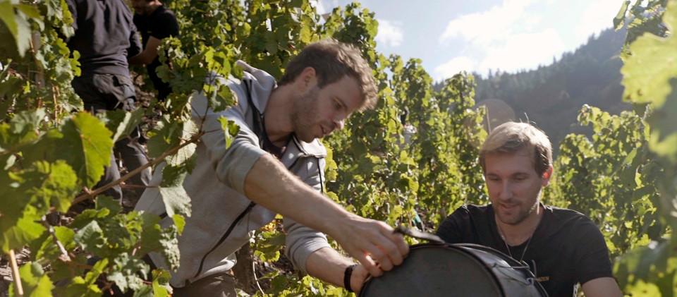 Lucas und Kilian bei der Weinlese.