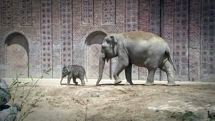 ETC-Spezial: Der Elefanten-Umzug