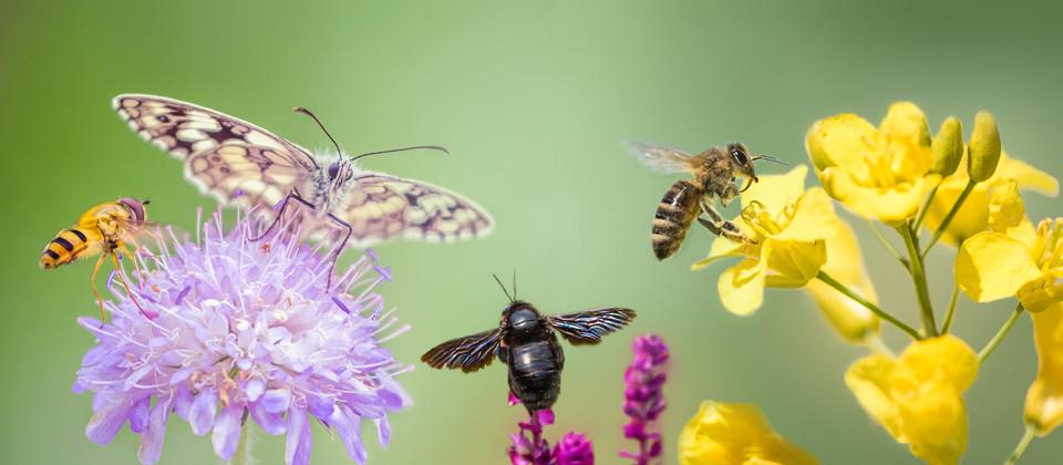 SWR-Aktion: Rettet die Insekten!