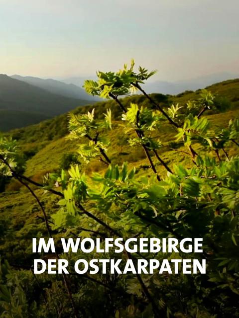 Berglandschaft der Ostkarpaten
