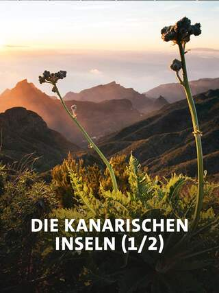 Bergpanorama Teneriffa (Bild: rbb/NDR/NDR Naturfilm/doclights/Science Vision/Michael Schlamberger)