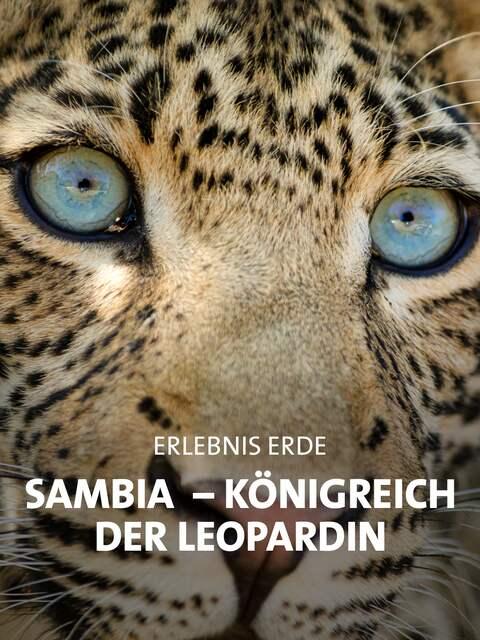 Junger Leopard mit aufmerksamem Blick