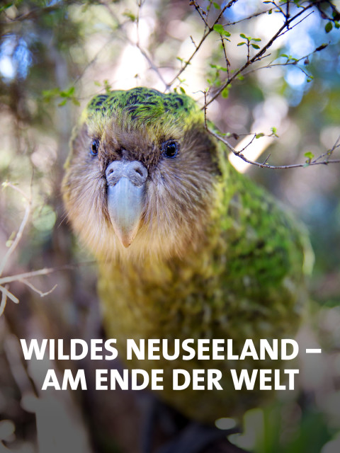 "Kakapo Papagei ""Sirocco"" im Baum"