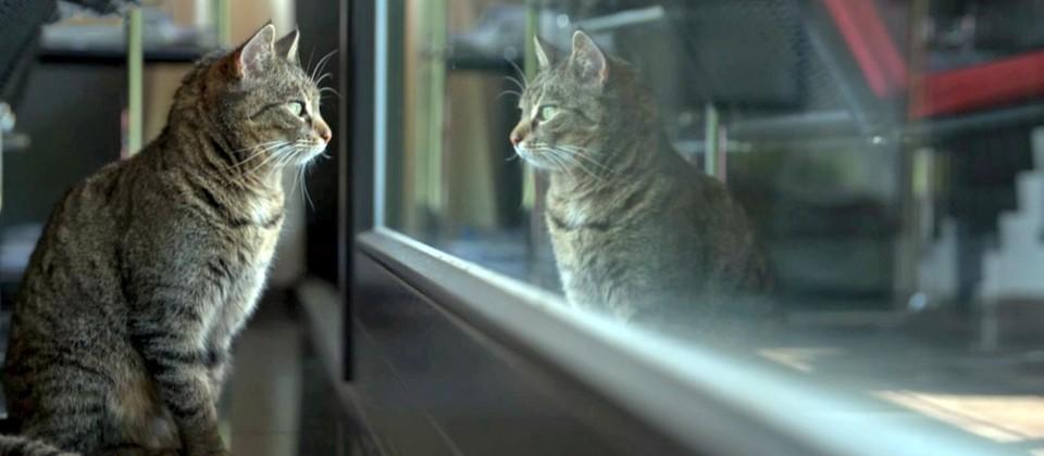 Katze schaut durch bodenhohes Fenster nach draußen und spiegelt sich dabei in der Scheibe