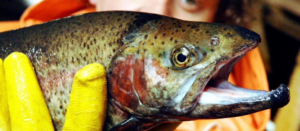 Ein Fischer hält einen Fisch in der Hand.