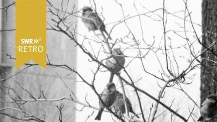 SWR Retro Vogel im Frühling