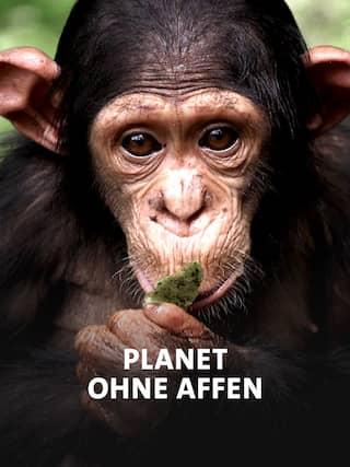 Planet ohne Affen