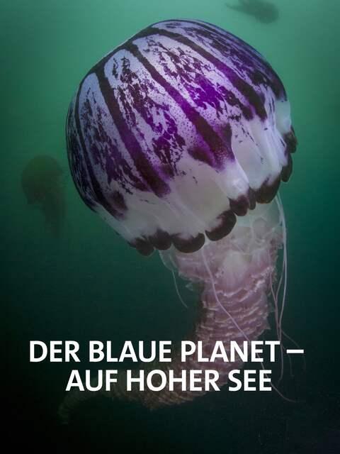 Der blaue Planet: Auf hoher See