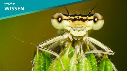 MDR Wissen: Insekten