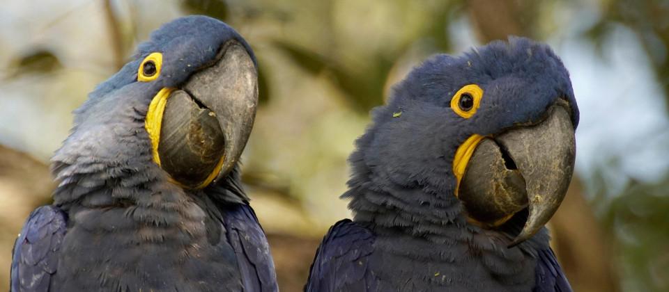 Naturwunder Pantanal