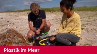 Maus - Plastikmüll im Meer