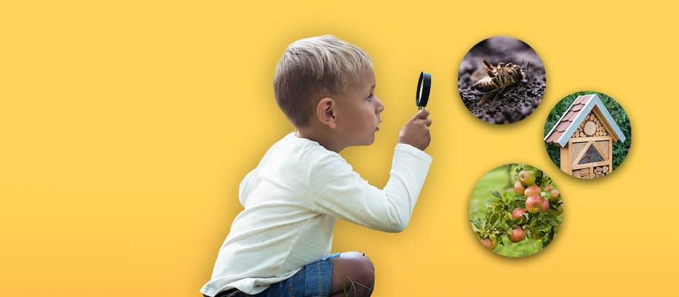 Ein kleiner Junge sitzt mit einer Lupe in der Hocke vor gelbem Hintergrund (man sieht ihn im Profil). Um ihn herum schweben drei Blasen mit Symbolen: Ast eines Apfelbaumes mit vielen Äpfeln, ein Insektenhäuschen und eine tote Biene in Nahaufnahme auf dem Boden.