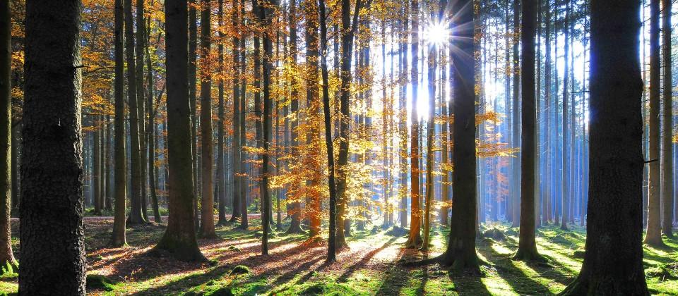 Ein Herbstwald im Gegenlicht. (Quelle: imago images / alimdi)