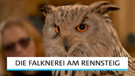 Doku-Serie Die Falknerei