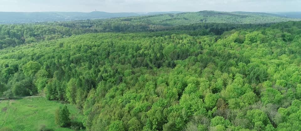 Blick von oben auf einen Wald