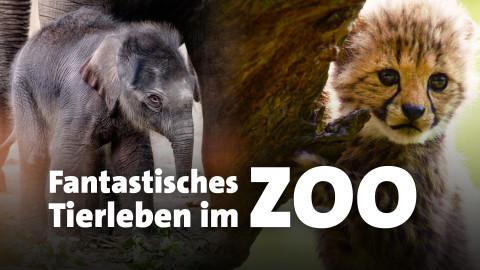 Show-Teaser mit Typo: Fantastische Tierleben im Zoo
