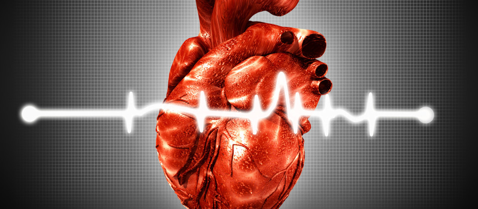 Ein Herz mit einer EKG Linie im Vordergrund