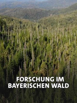 1970 wurde der Nationalpark Bayerischer Wald als erster Nationalpark in Deutschland gegründet. Dass die Natur im Schutzgebiet sich selbst überlassen wurde, war damals umstritten. Seit vielen Jahren begleitet die Wissenschaft den Prozess vom ehemaligen Wirtschaftswald zurück zum Urwald. Für die Forschung an Insekten, seltenen Tier- und Pflanzenarten sowie zur Biodiversität ist der Nationalpark ein einzigartiges Forschungsfeld.
