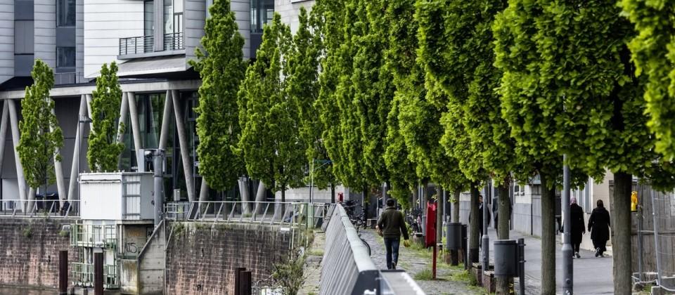 Vor allem für Nachpflanzungen im urbanen Raum sind große Bäume wesentlich besser als kleine / Nachpflanzungen im urbanen Raum.