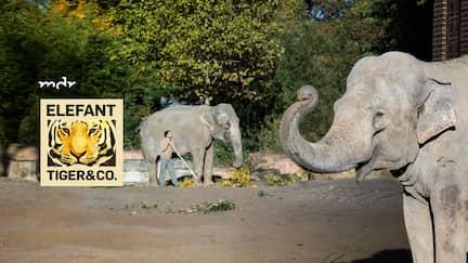 Elefant, Tiger & Co - Sendereihenbild