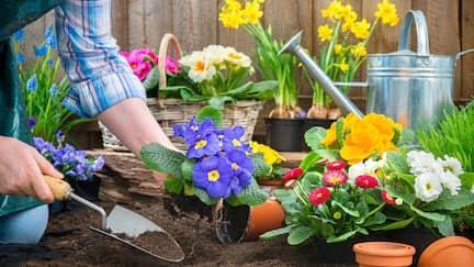 Blumen werden eingepflanzt