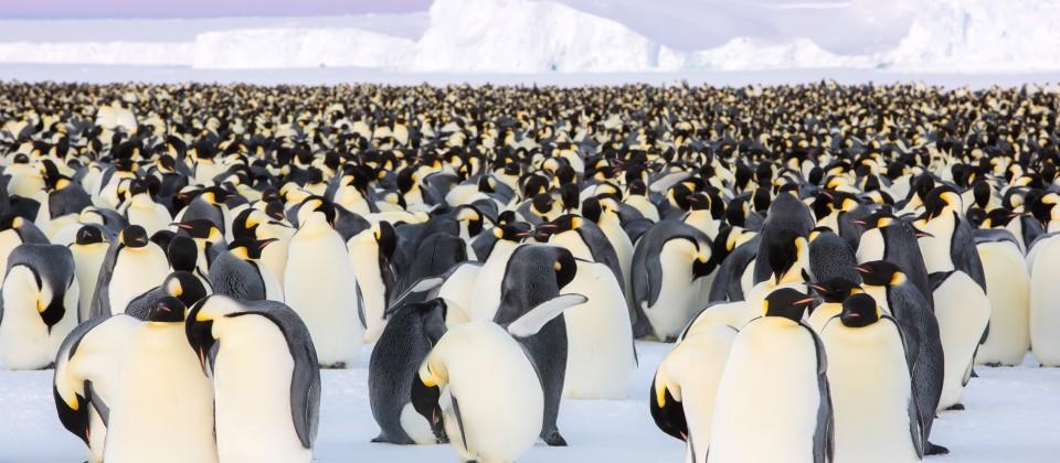 Kaiser der Antarktis