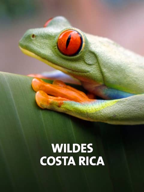Farbenfroher Frosch auf einem Blatt