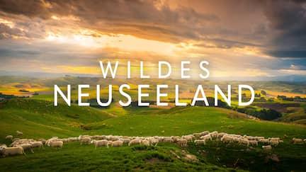 Hügelige Agrarlandschaft mit Schafherde